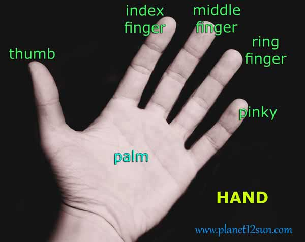 Image Gallery Name Of Second Finger