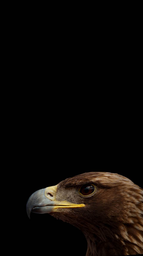 Head Eagle Wallpaper Phone Planet12suncom Printables